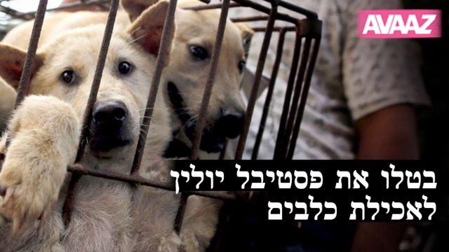 """מתוך עמוד הקמפיין בעברית באתר """"Avaaz"""""""
