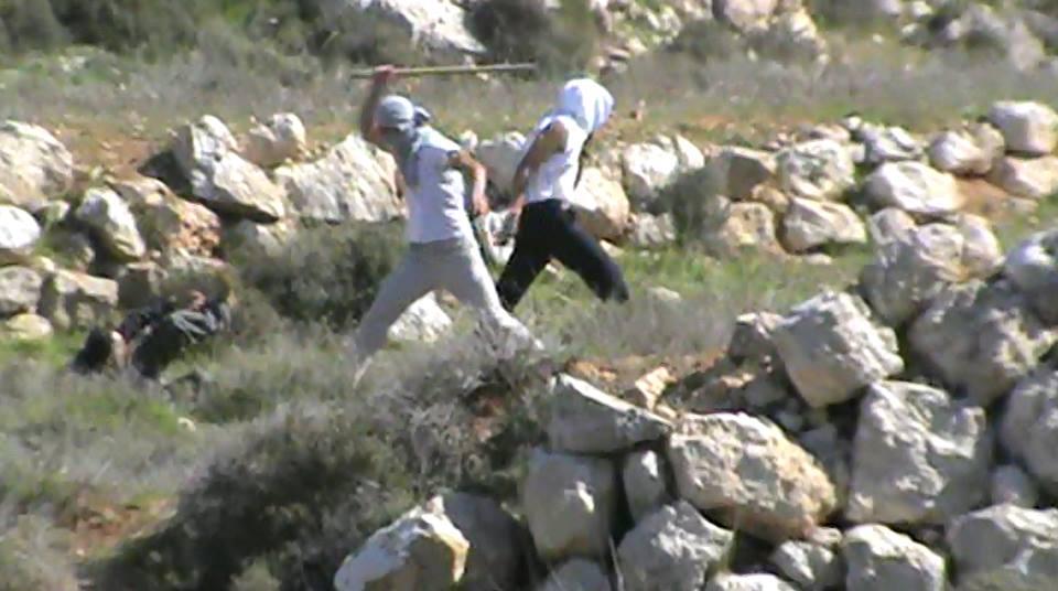 תקיפת מתנחלים, אשתמוע, דרום הר חברון.  8-6-2014 צילום: תעאיוש.