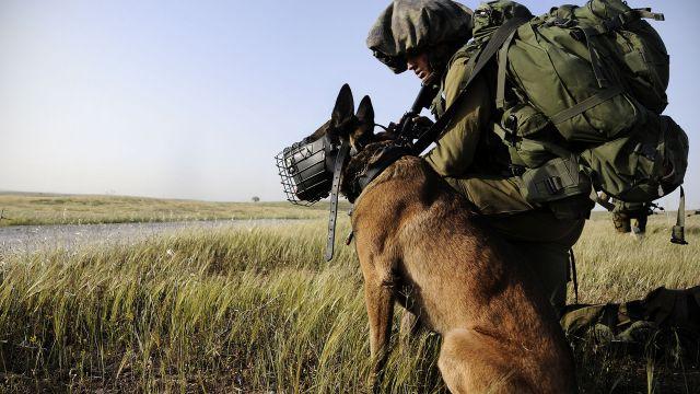 IDF dog